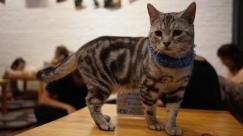 cat-cafe-9