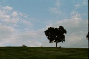 35mm Canon AE-1 • CineStill 50 • Whittier, CA