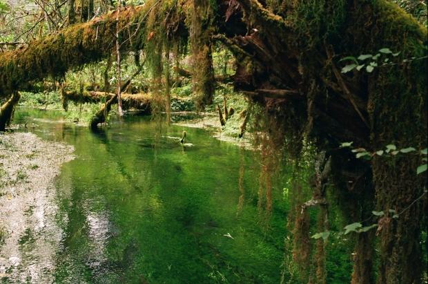 35mm Canon AE-1 • Kodak Portra 400 • Hoh Rain Forest, WA