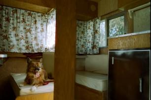 35mm Nikon FE2 • CineStill 50 • Studio City, CA